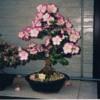 Ricoh Flower